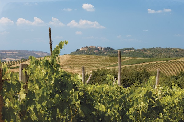 Adventures By Disney Tuscany vineyards image